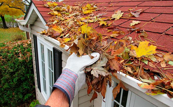 Vientos, lluvias y caídas de hojas son los principales problemas en esta época del año.